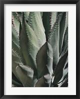 Agave II Framed Print