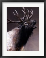 Framed American Icon- Elk