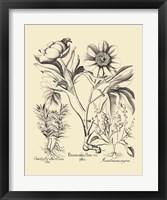 Framed Black and White Besler Peony IV