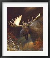 Framed Moose Portrait