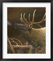 Framed Elk Portrait I