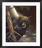Framed Bear Portrait