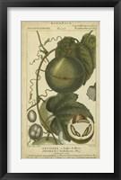 Framed Exotic Botanica I