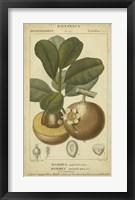 Framed Exotic Botanica II