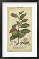 Framed Exotic Botanica III