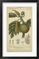 Framed Exotic Botanica IV
