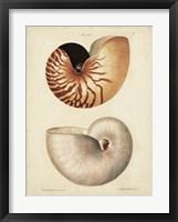 Framed Antique Nautilus I