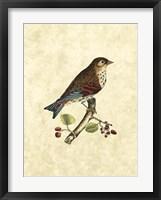 Framed Birds III