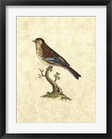 Framed Birds IV