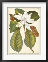 Framed Magnificent Magnolias II