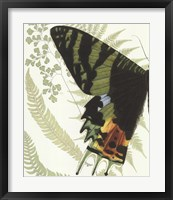 Butterfly Symmetry I Framed Print