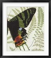 Butterfly Symmetry II Framed Print