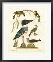 Framed Antique Kingfisher I
