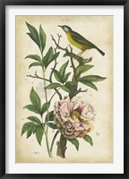 Framed Antique Bird in Nature II