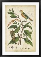 Framed Antique Bird in Nature IV