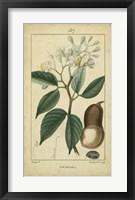 Framed Vintage Turpin Botanical I