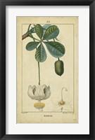 Framed Vintage Turpin Botanical II