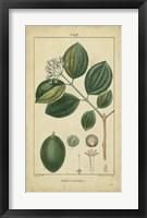 Framed Vintage Turpin Botanical III