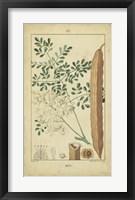 Framed Vintage Turpin Botanical V