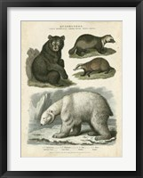 Framed Brown Bear & Polar Bear