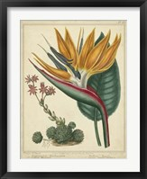 Framed Golden Bird of Paradise