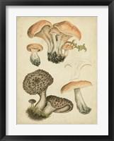 Framed Antique Mushrooms I