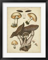 Framed Antique Mushrooms II