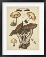 Framed Antique Mushrooms II