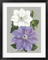 Framed Clematis Blooms I