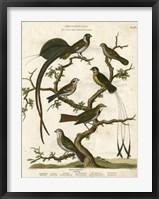Framed Ornithology I
