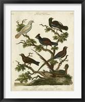 Framed Ornithology II