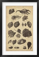Framed Study of Shells I