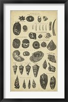 Framed Study of Shells II