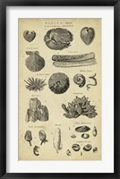 Framed Study of Shells IV