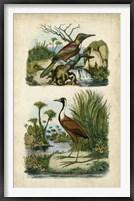 Framed Avian Sanctuary II