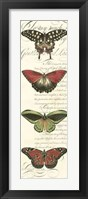 Butterfly Prose Panel I Framed Print
