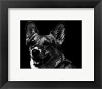 Framed Canine Scratchboard XXIX