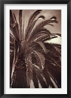 Framed Whispering Palm