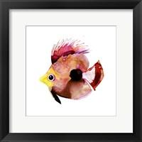 Framed Pink Fish