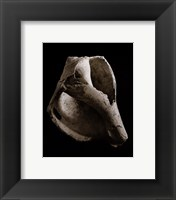 Whelk (small) Framed Print