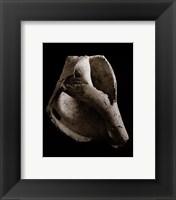 Framed Whelk (small)