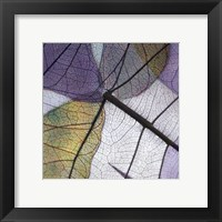Framed Purple and Grey Leaves II