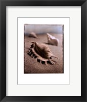 Seashell III Framed Print