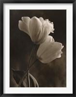 Bending Tulip Framed Print