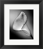 Framed CALLA NO.3, FRONT-SILVER SERIE