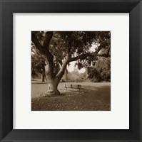 Framed Arboretum