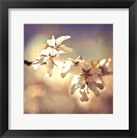 Framed Soft Bloom I