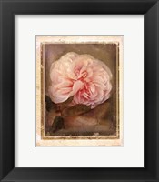 Framed CABBAGE ROSES