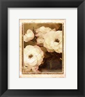 Framed ROSE- WHITE