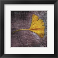 Gingko 4 Framed Print